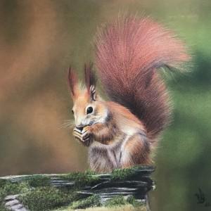 Fatma Yildiz – Eichhörnchen
