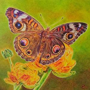 """Petra Cleve – """"Leben allein genügt nicht, sagte der Schmetterling, Sonnenschein, Freiheit und eine Blume muß man auch haben."""" Hans Christian Andersen"""